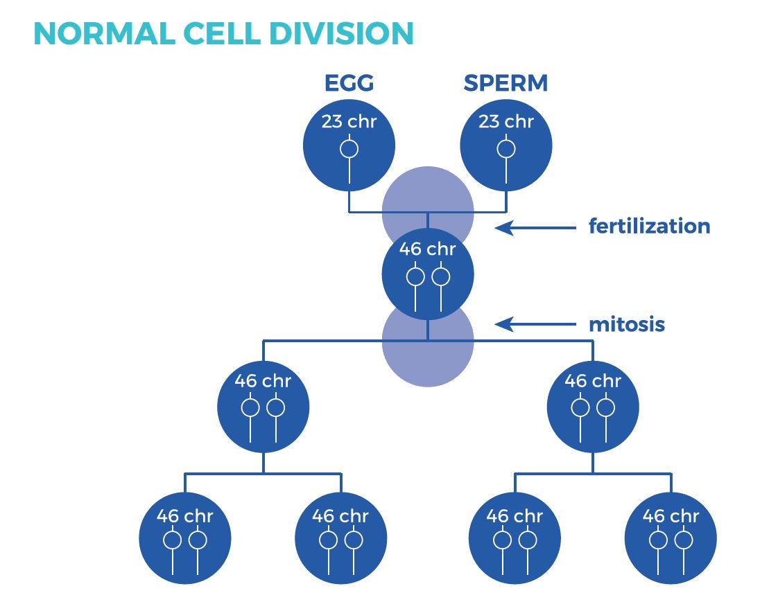 Chromosome Nondisjunction Animation - YouTube |Nondisjunction Trisomy 21